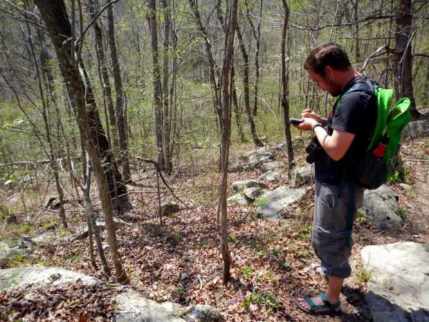 Jonathan recording species, Buggy Top Trail, Tennessee