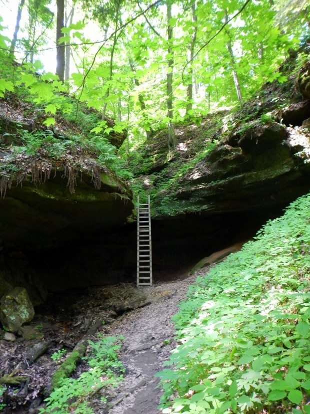Ladder on Trail 4, Shades State Park, Indiana