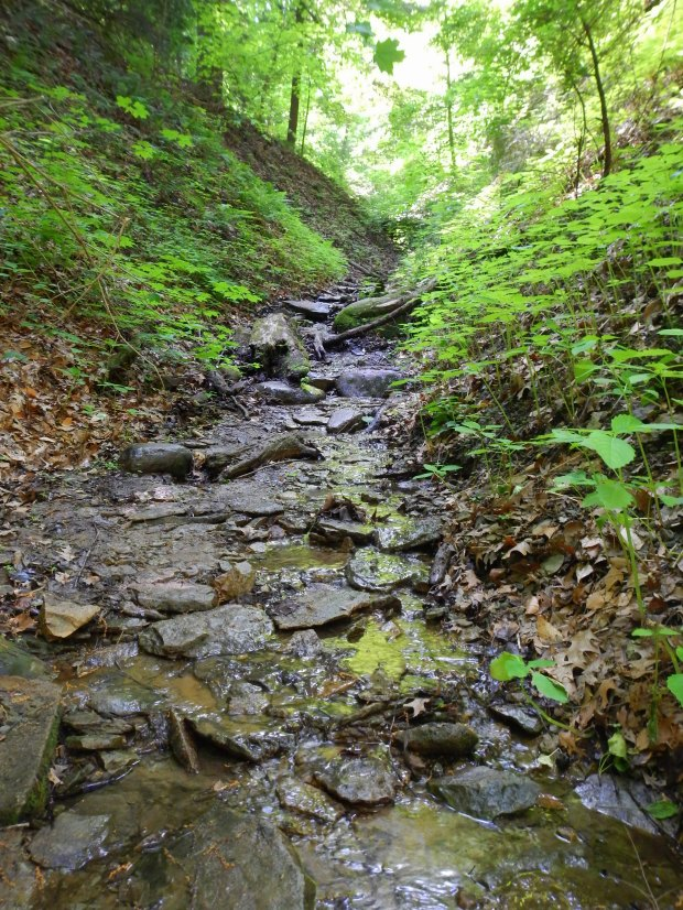 Streambed of Trail 5, Shades State Park, Indiana