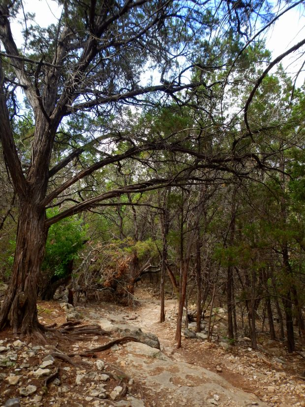 Goodwater Loop, San Gabriel River Trail, Cedar Breaks Park, Lake Georgetown, Texas