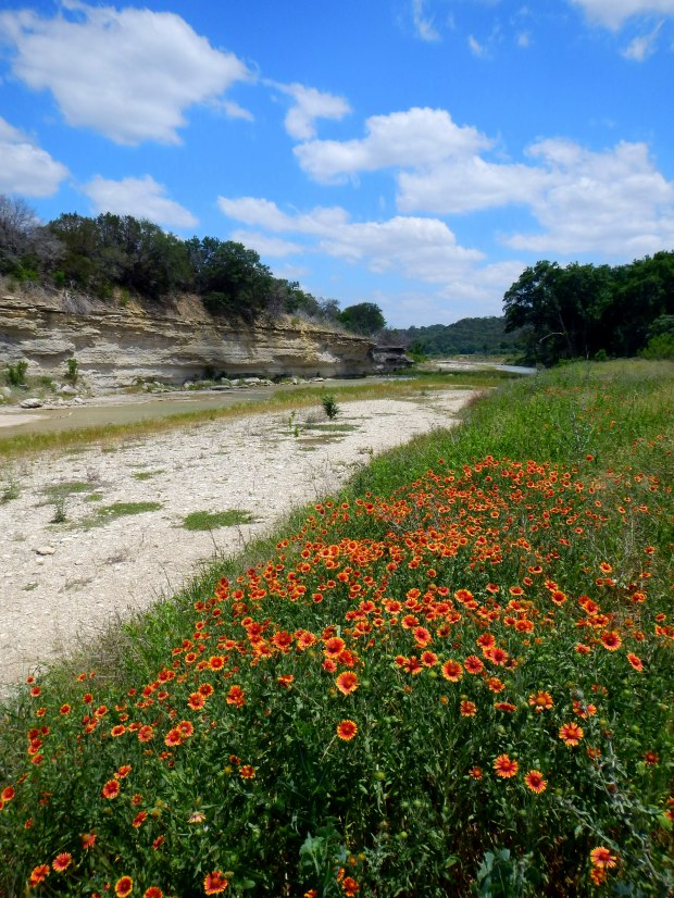 Dried riverbed of the North Fork of the San Gabriel River with some pretty flowers, San Gabriel River Trail, Texas