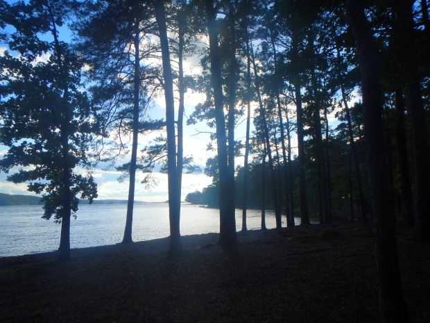 Trees along the shore of DeGray Lake, Arkansas