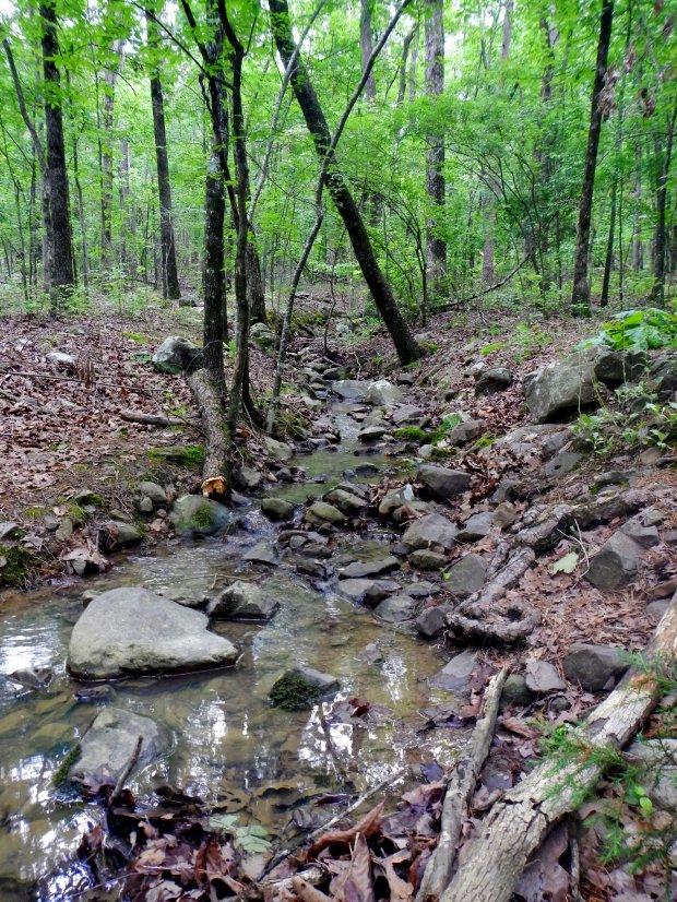 East Quarry Trail, Pinnacle Mountain State Park, Arkansas
