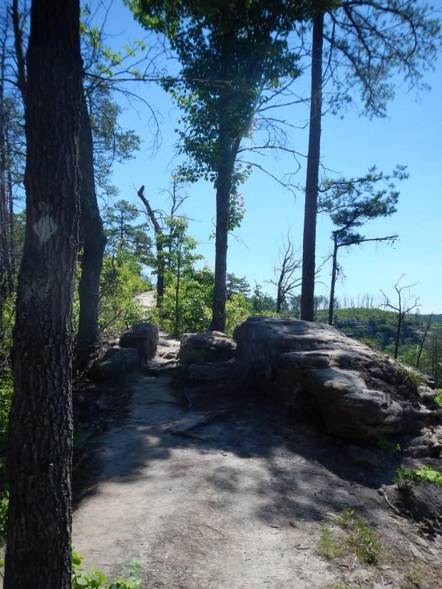Auxier Ridge, Auxier Ridge Trail, Daniel Boone National Forest, Kentucky