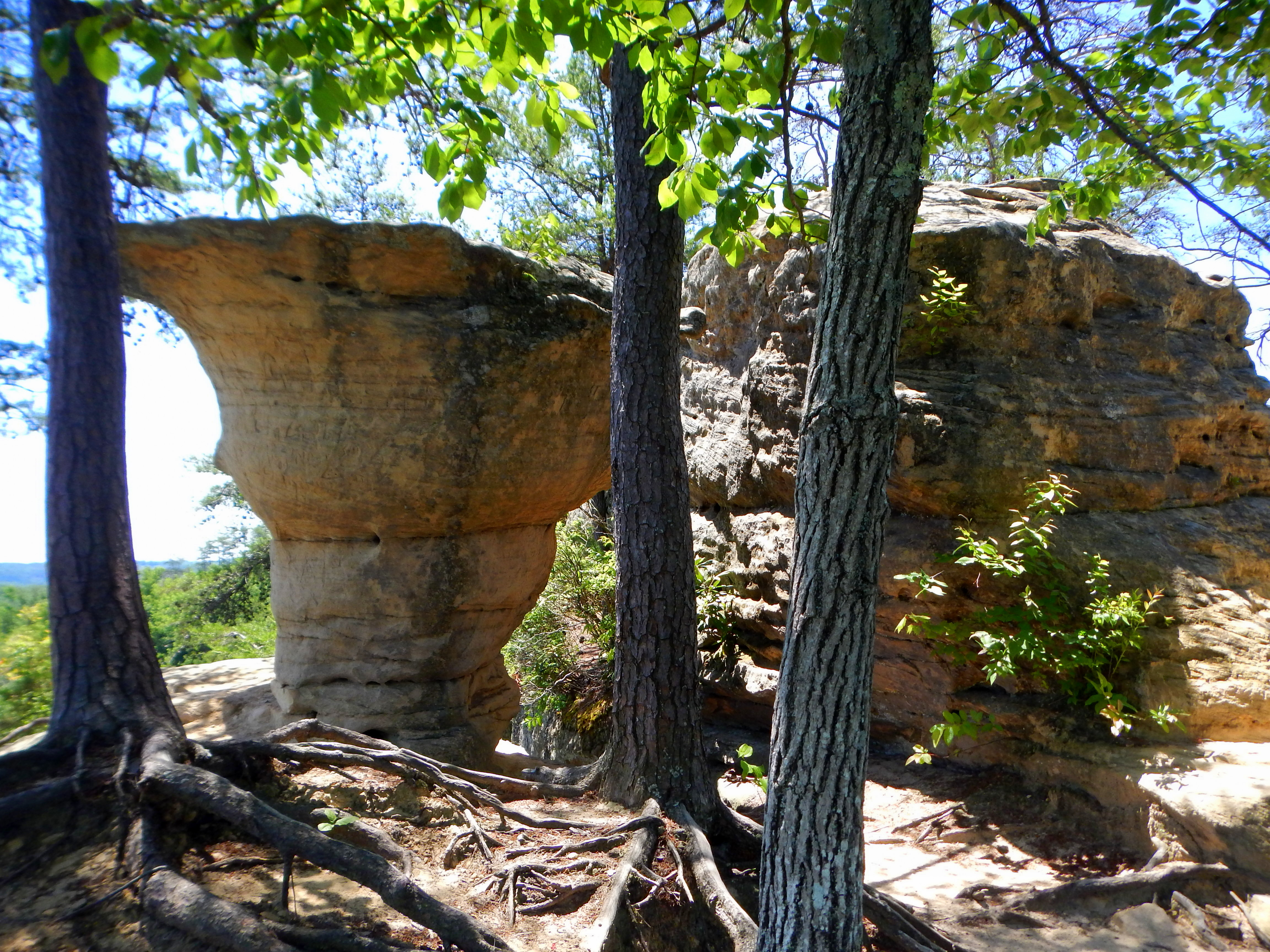Auxier Ridge Loop Trail and Double Arch, Daniel Boone National ...