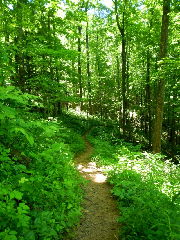 Forested Auxier Branch Trail, Daniel Boone National Forest, Kentucky