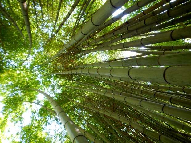 Bamboo Forest, Oconaluftee Islands Park, Cherokee, North Carolina