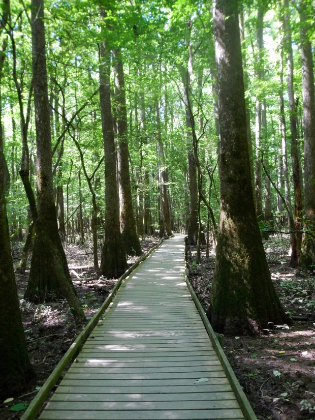 Boardwalk Loop Trail through the Cypresses, Congaree National Park, South Carolina