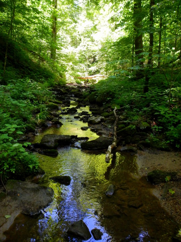 Stream along the Auxier Branch Trail, Daniel Boone National Forest, Kentucky