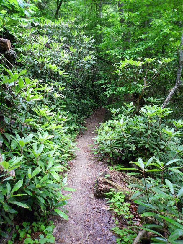 The lush Battleship Rock Trail, Natural Bridge State Park, Kentucky