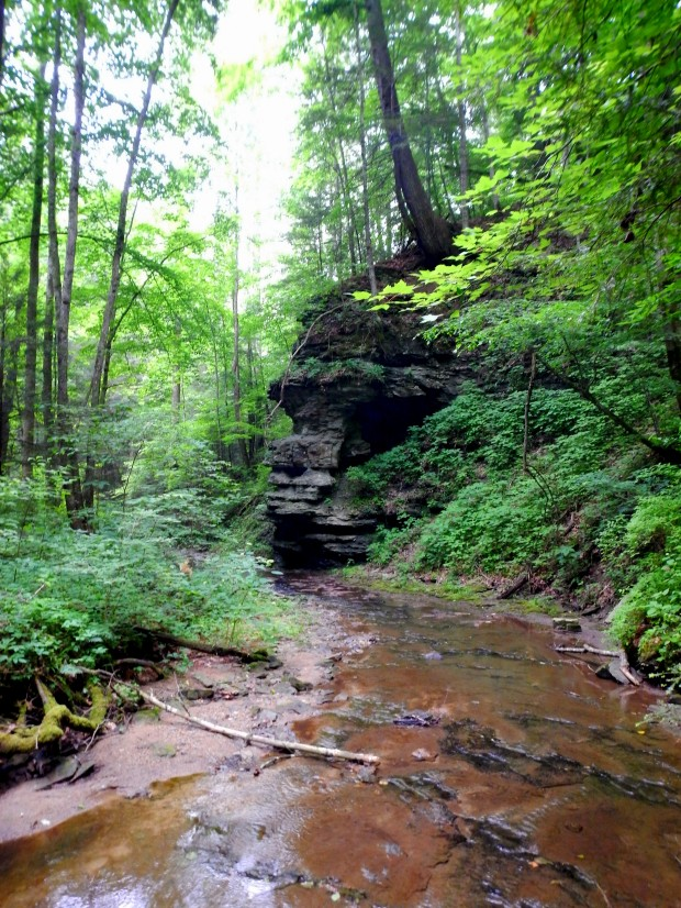 Stream, Whittleton Branch Trail, Daniel Boone National Forest, Kentucky