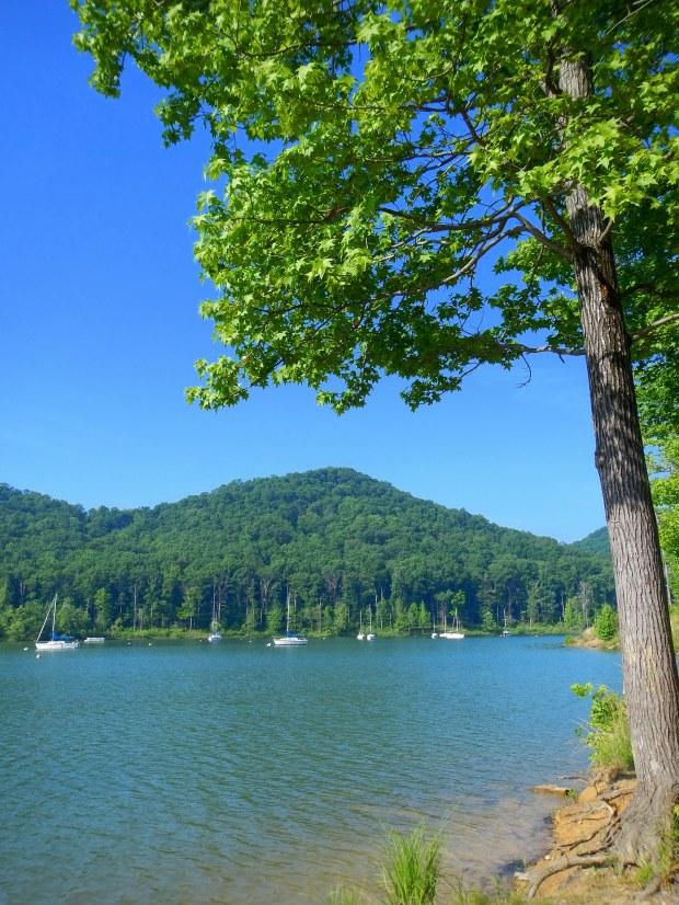 Scott Creek Marina, Cave Run Lake, Daniel Boone National Forest, Kentucky