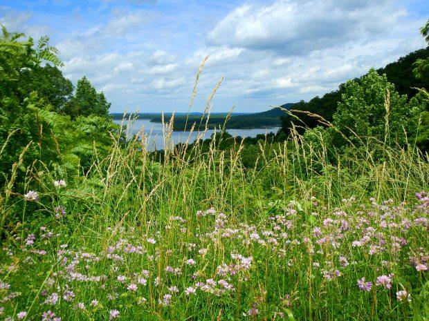 Overlook of Cave Run Lake near Zilpo Recreation Area, Daniel Boone National Forest, Kentucky