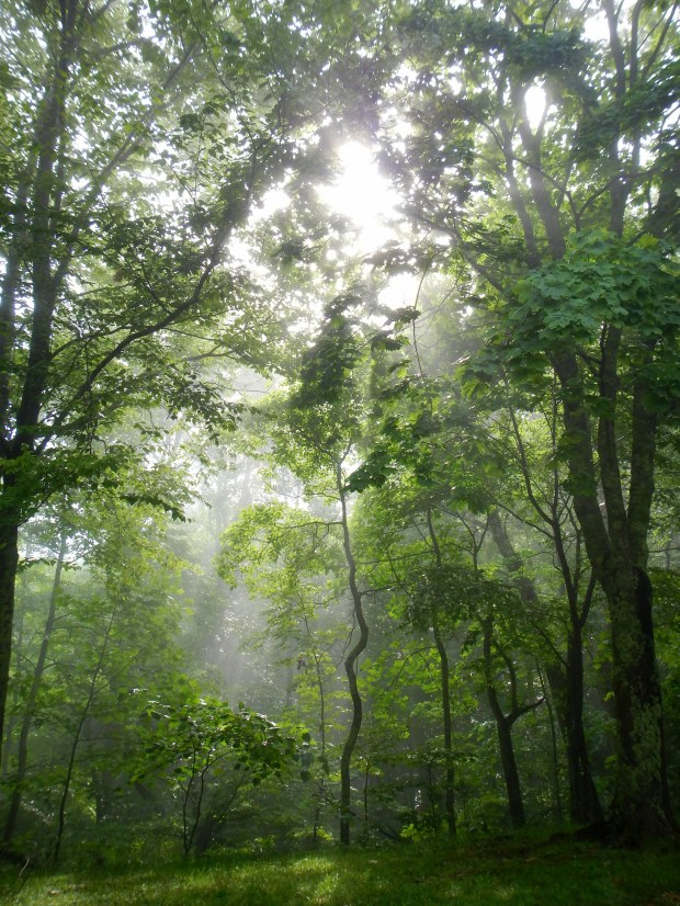 Sunlight through the fog on the drive up Pinnacle Mountain, Cumberland Gap National Historical Park, Kentucky