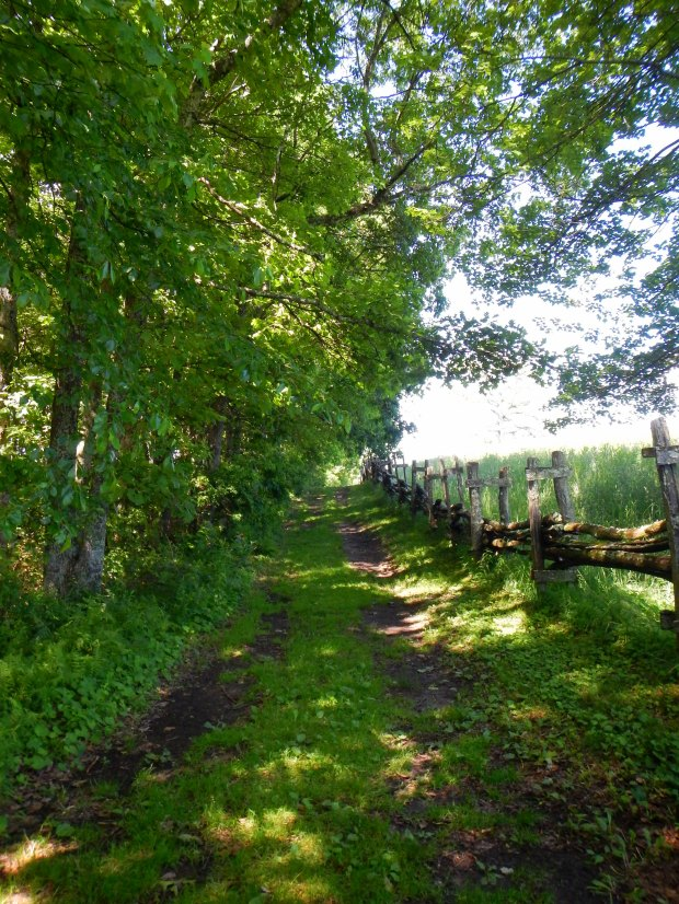 Path towards schoolhouse, Hensley Settlement, Cumberland Gap National Historical Park, Kentucky