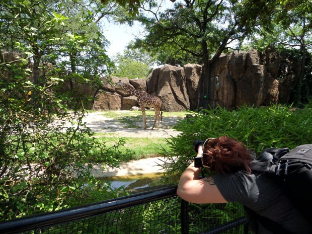Tina photographing the giraffes, Philadelphia Zoo, Philadelphia, Pennsylvania