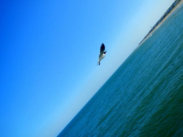 Bird crazy, Kure Beach Pier, Kure Beach, North Carolina