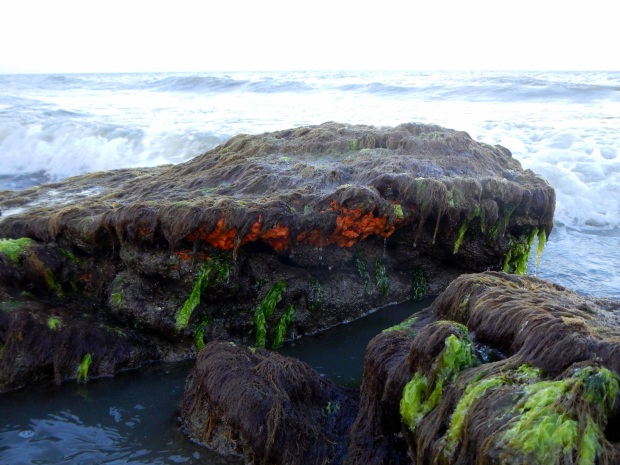 Closeup of coquina outcroppings, Kure Beach, North Carolina