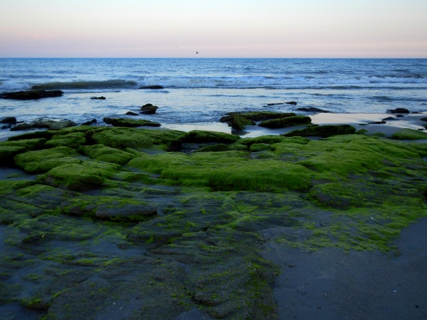 Coquina outcroppings, Kure Beach, North Carolina