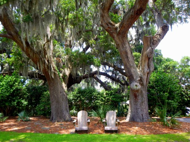 Oaks and Spanish moss, Airlie Gardens, Wilmington, North Carolina