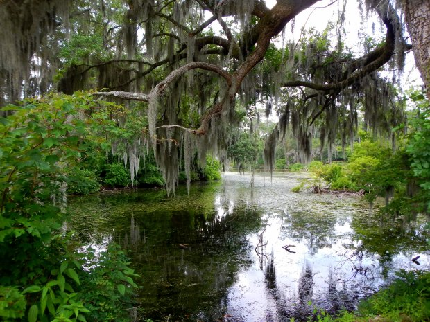 Oak with Spanish moss overhanging a pond, Airlie Gardens, Wilmington, North Carolina