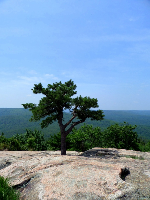 Tree overlooking the Hudson River, Bear Mountain State Park, New York