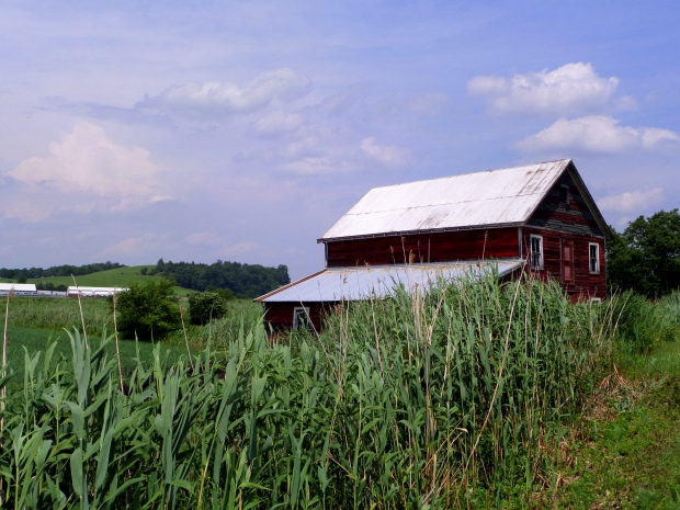 Small roadside barn, Black Dirt Country, Orange County, New York
