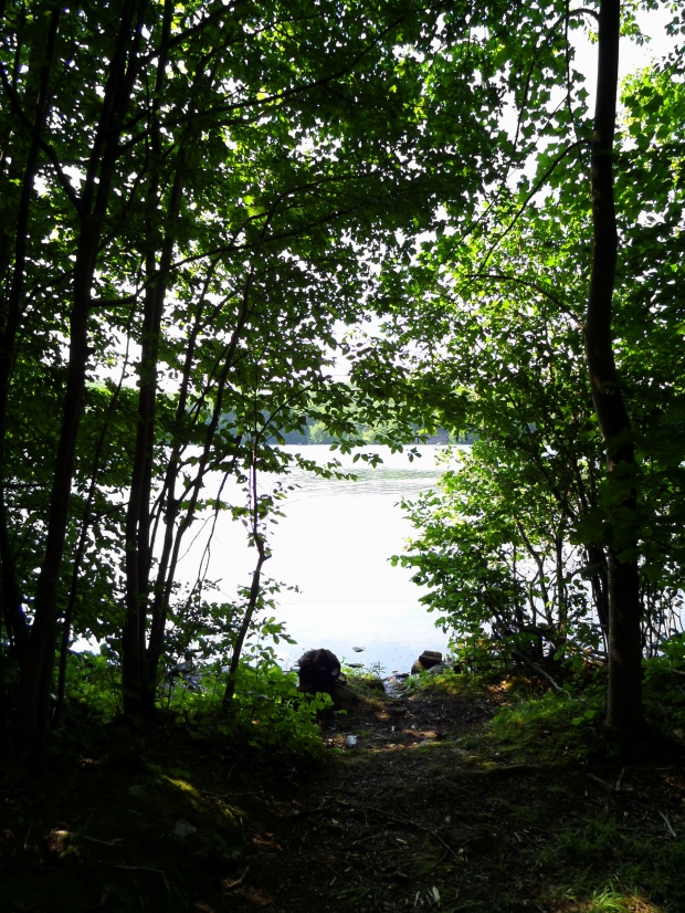 Bright sun on the water on trail approach to Monksville Reservoir, New Jersey