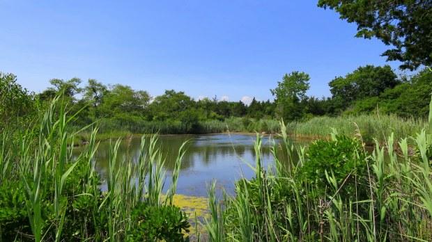 Kettle pond, Ninigret Wildlife Refuge, Charlestown, Rhode Island