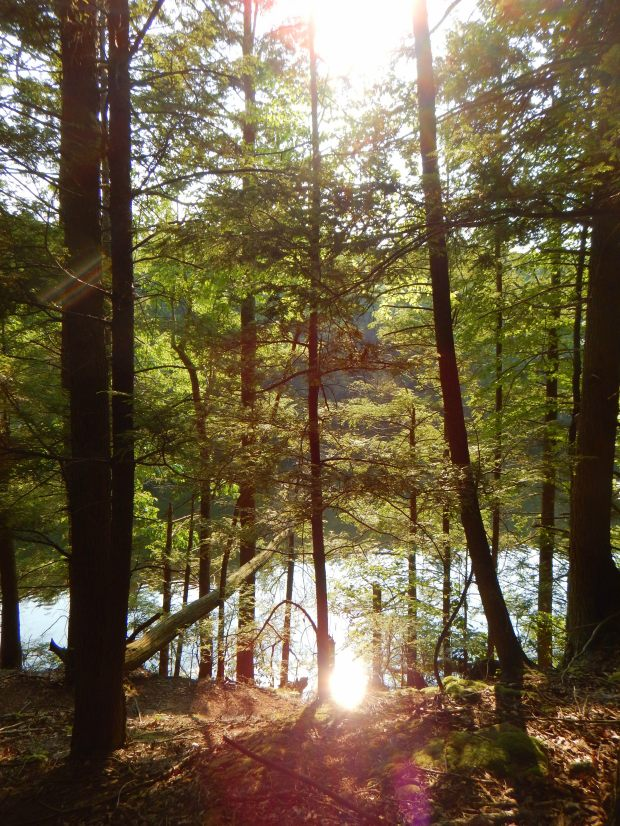 Double sun burst, Green Fall Pond, Pachaug State Forest, Connecticut