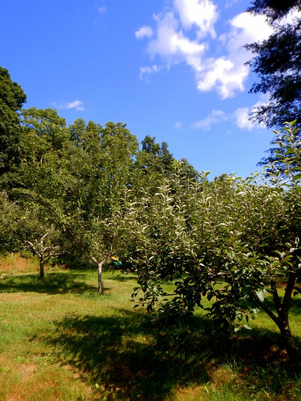 Fruit trees, Stonyledge Farm, Clarks Falls, Connecticut