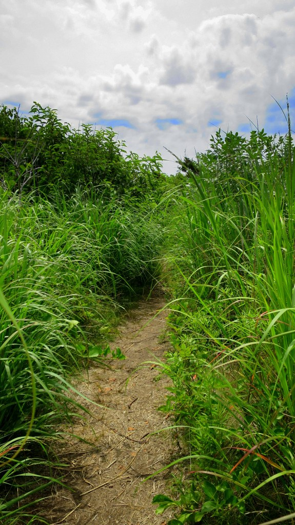 Footpath through the dune grass, Bluff Point State Park, Groton, Connecticut