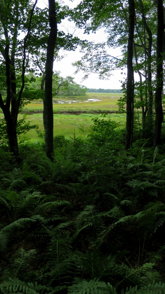 Salt marsh seen from Interpretive Trail, Rachel Carson National Wildlife Refuge, Maine
