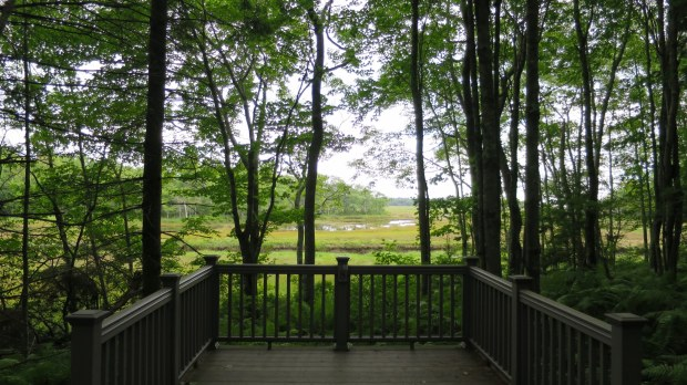 Viewing platform along Interpretive Trail, Rachel Carson National Wildlife Refuge, Maine