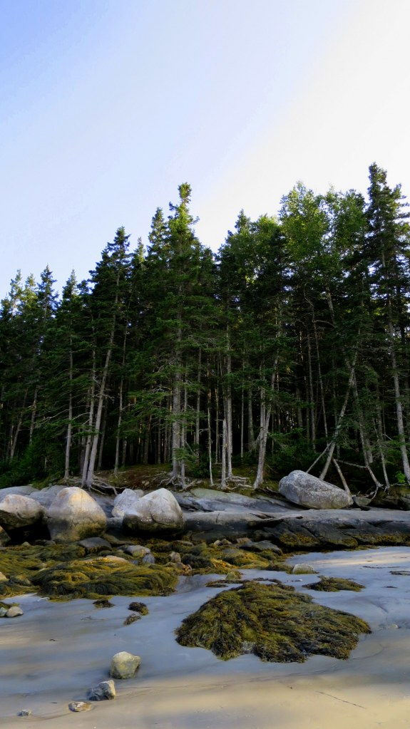 Where the beach meets the forest, Birch Point State Park, Owls Head, Maine