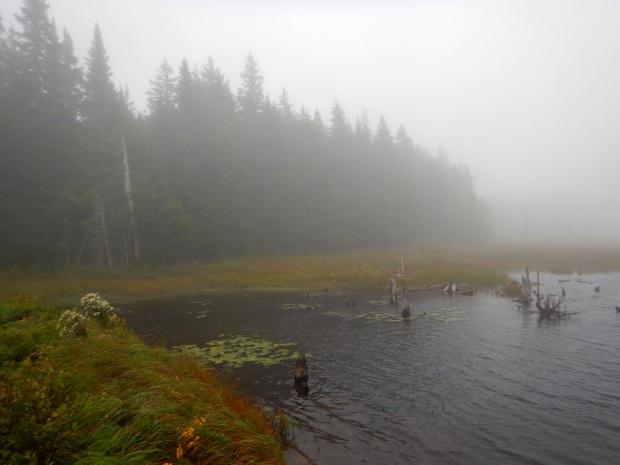 Peat bog, Caribou Plain,  Fundy National Park, New Brunswick, Canada