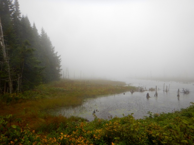 Peat bog, Caribou Plain,  Fundy National Park, New Brunswick, Canada