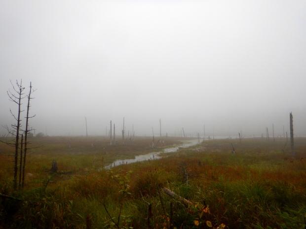 Fog over the bog, Caribou Plain, Fundy National Park, New Brunswick, Canada