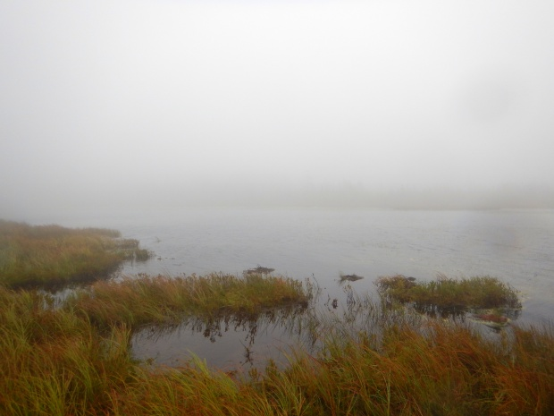 Peat bog, Caribou Plain Trail, Fundy National Park, New Brunswick, Canada