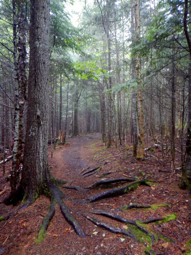 Kinnie Book Trail, Fundy National Park, New Brunswick, Canada