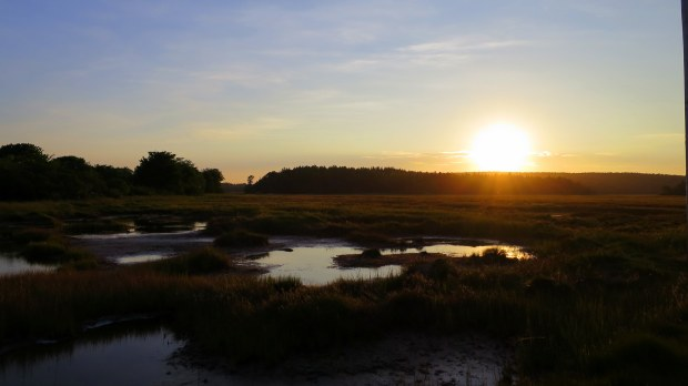 Salt marshes at sunset, Maine