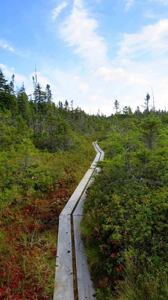 Raised trail through the fragile bog, Nature Trail, New River Beach Provincial Park, New Brunswick, Canada