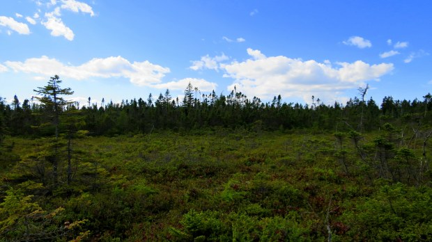 Bog, Nature Trail, New River Beach Provincial Park, New Brunswick, Canada