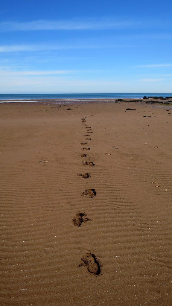 Depth of footprints to illustrate the saturation of sand and clay, West Quaco, New Brunswick, Canada.  (Brian , I know what you're thinking)