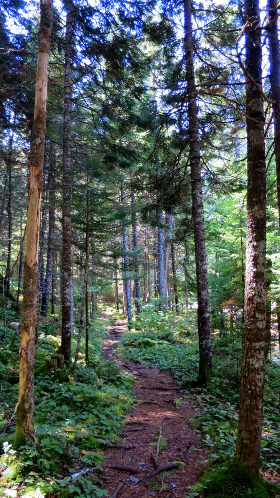 Hearst Lodge Trail, Fundy Trail, New Brunswick, Canada