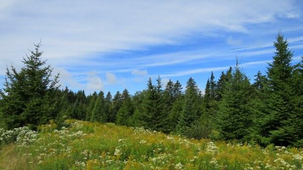 Beginning of Matthews Head Trail crossing a field of wildflowers, Fundy National Park, New Brunswick, Canada