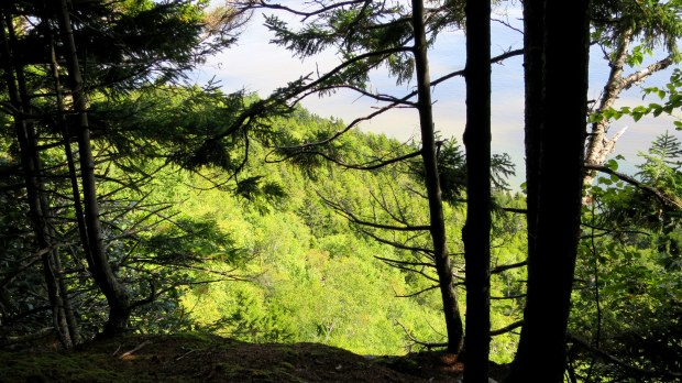 View of the surrounding forest from a headland, Coastal Trail, Fundy National Park, New Brunswick, Canada
