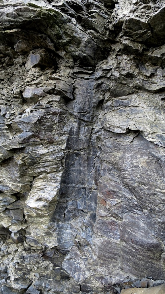 Imprint of the lower trunk of a lepidodendron tree, Joggins Fossil Cliffs, Nova Scotia, Canada