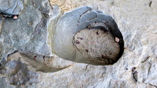 Hollow cast of tree, Joggins Fossil Cliffs, Nova Scotia, Canada
