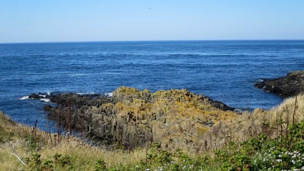 Columnar basalt, Coastal Trail, Brier Island Nature Preserve, Nova Scotia, Canada